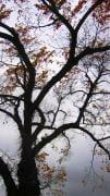 baretrees4