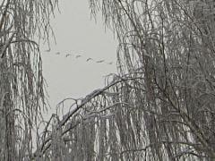 birdconfusion