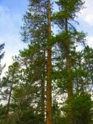 treescanmore4_sm