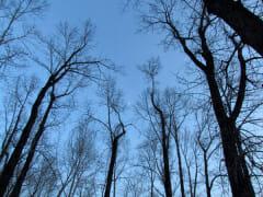 newyears2012-trees