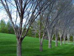 Baker Park Spring