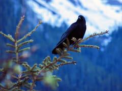 Crow-mtn