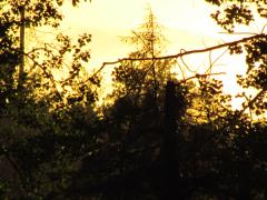 impressionist-sunset