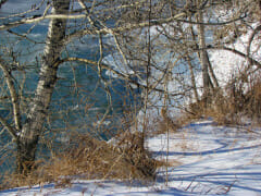 icy-river-walk