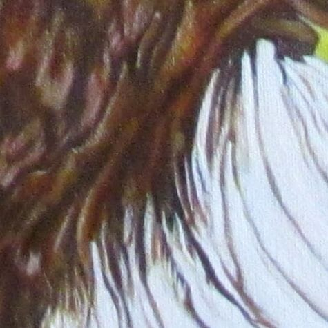 eagle painting closeup
