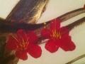 cherry-blossom-closeup_sm-600x372