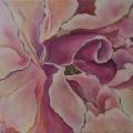 Tea Rose Pink One