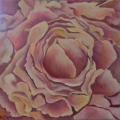 Tea Rose Pink Two