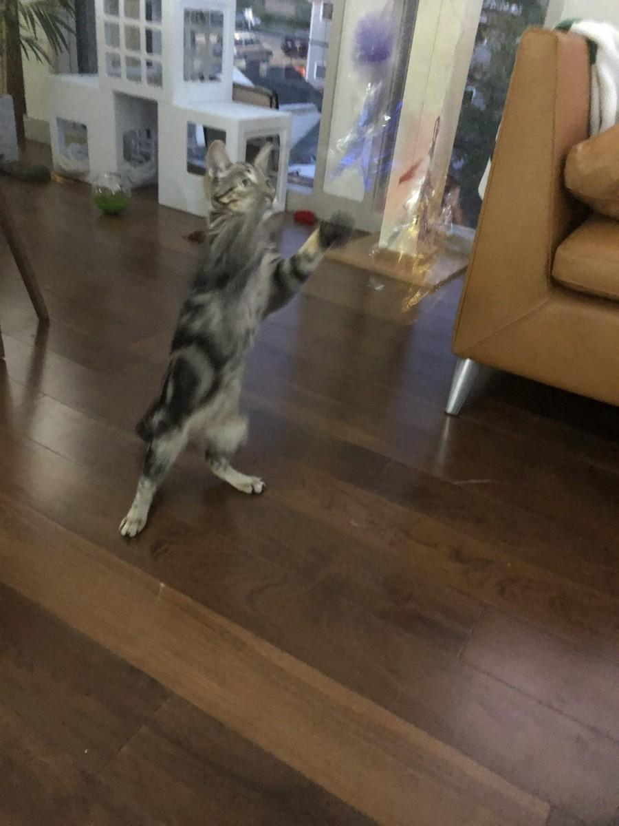 Penny Dancing