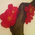 Cherry Blossom Closeup 2