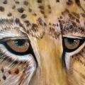Leopard Mural Closeup