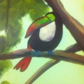 Toucan on Branch