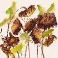 sketchbook-sunflowers