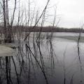 Spring Wetlands