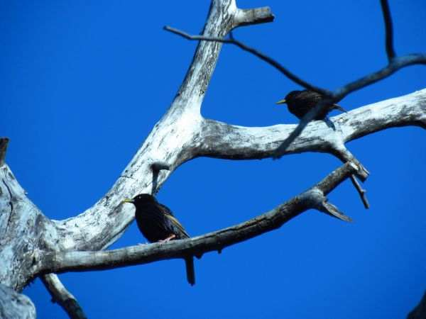 birds-sanctuary