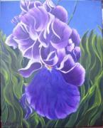 iris wip