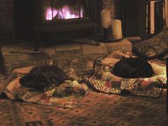 warm cats