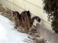 bush kitties