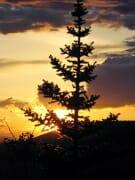 sunset lone tree