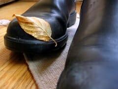 Shoe Leaf