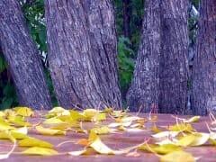 Table Leaves