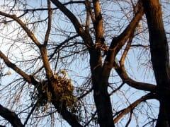 Squirrel Nest