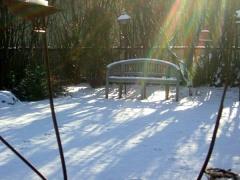Winter Rays