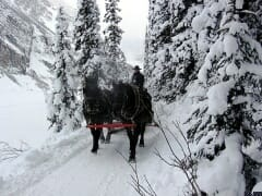 Horses on Ski Trail