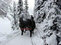 Horses on Ski Trail