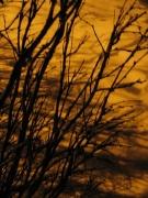 Sepia Branches