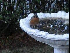 Robin Bath