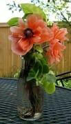 poppies vase roots