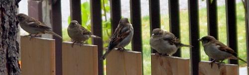 birds in a row