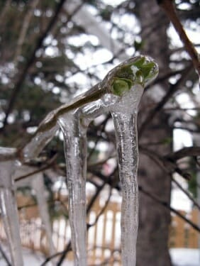 Ice Cacoon