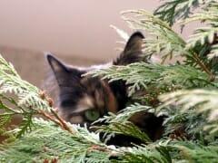 Incognito Cat