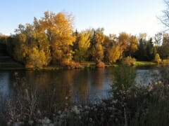 bow river autumn