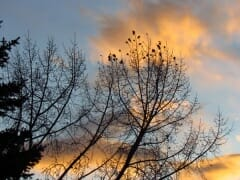 Late Oct Sunset