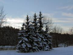 winter river trees