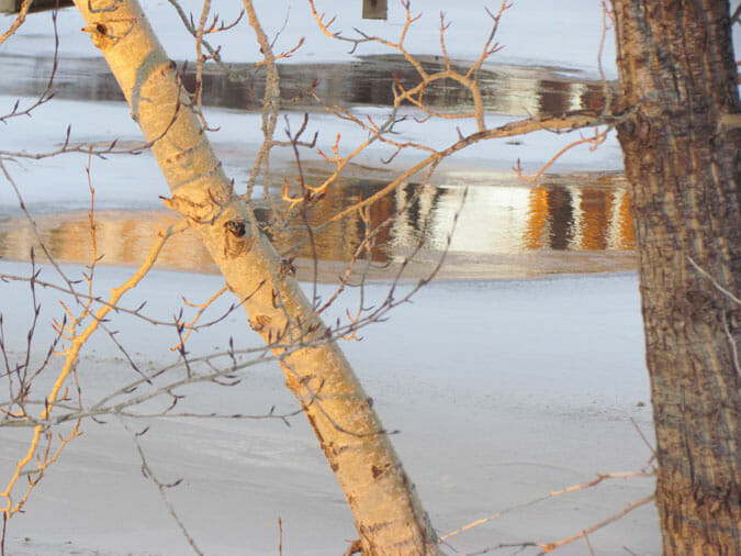 january reflections