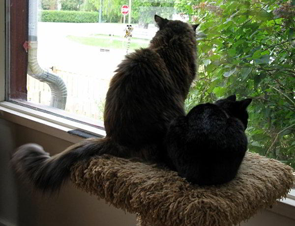 sisters-looking-out