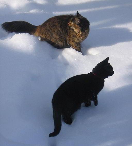 snow-cats
